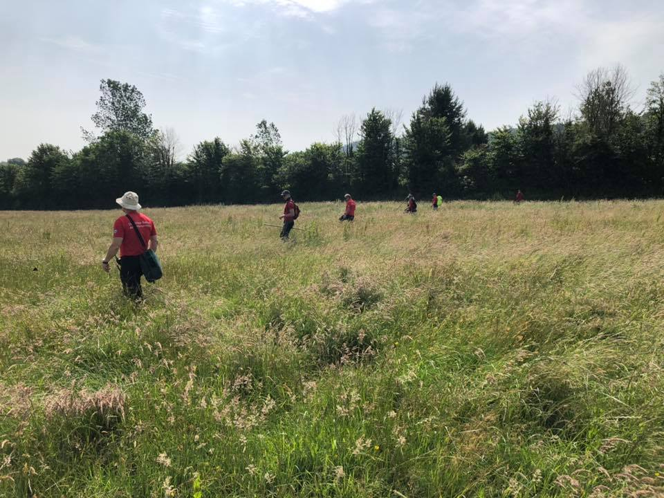 Dartmoor Rescue Ashburton volunteers searching farmland on the edge of Haldon forest near Exeter