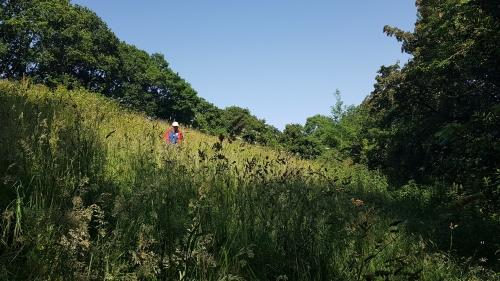 Dartmoor Rescue Ashburton team members searching difficult ground around Kennford near Exeter during the hottest weekend of the year