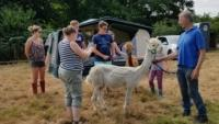 Alpaca's and marshmellows. All in the name of fundraising.